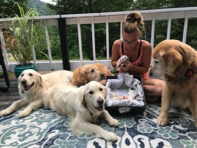Salty Dogs Golden Retriever Puppies - home